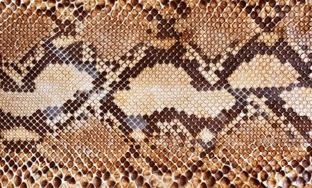Natter: Schlangenhaut Muster Hintergrund