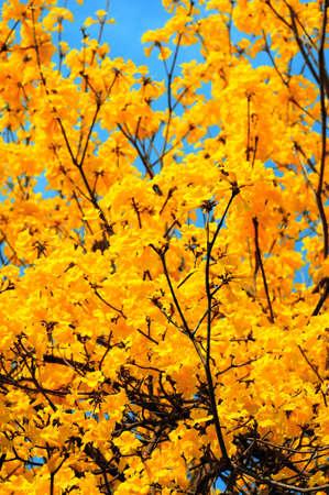 Primavera flor amarela bonita no c�u azul