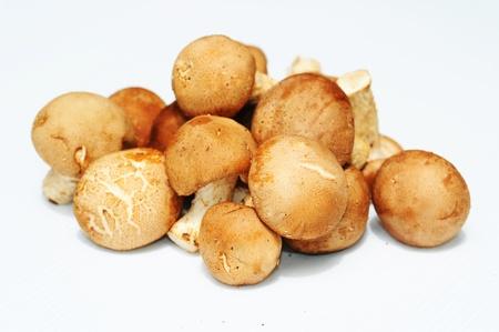 Cru inteiro Cogumelos Shiitake frescos Lentinula edodes isolado contra um fundo branco
