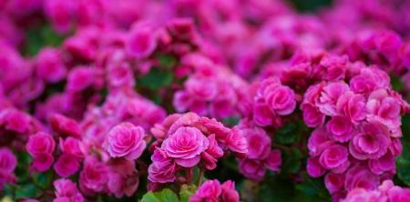 Flores bonitas da mola Banco de Imagens