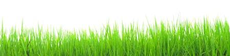 Primavera Grama verde fresca panorama isolado no fundo branco
