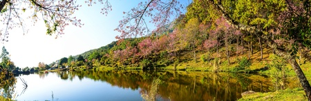Panaorama of lake view with bloom pink flower on the mountain  Stock Photo