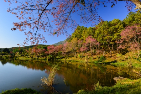 lake view with bloom pink flower on the mountain  photo