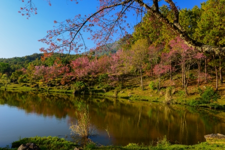 lake view with bloom pink flower on the mountain  Stock Photo