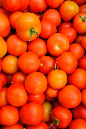 Close up of many fresh red tomatoes big fruit type