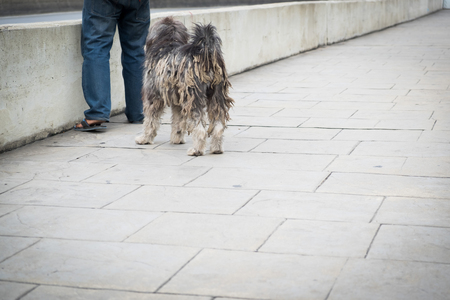 hairy legs: Extremely hairy and dirty dog stand at paving blocks floor and a mans legs with old concrete wall or concrete barrier.