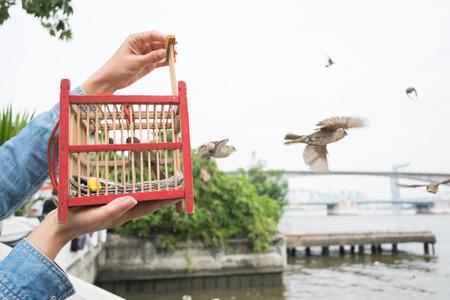 Main tenant une cage d'oiseau pour la libération à la liberté. Banque d'images - 69870206