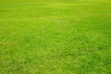 Green lawn for background. Green grass in the garden.