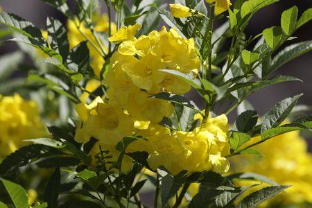 anubias: colecci�n de flores