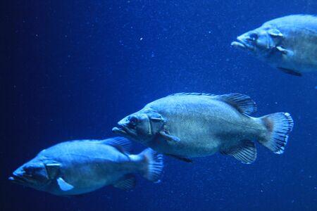 deepsea: Deep-sea fish