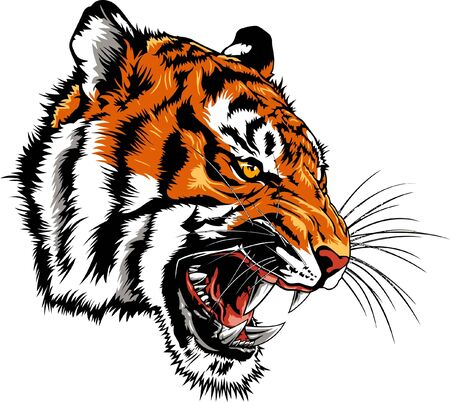 Angry Tiger head for logo design or Tshirt design. Tiger head illustration for Apparel design.