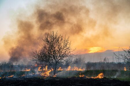 burns dry grass, in the sky, the smoke and soot. the environmental problem. Stock fotó