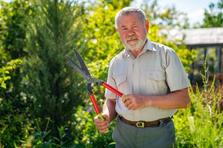 an elderly man gardener with a beard with scissors for cutting bushes and grass shear boxwood in the shape of a ball. garden works. employment in retirement.