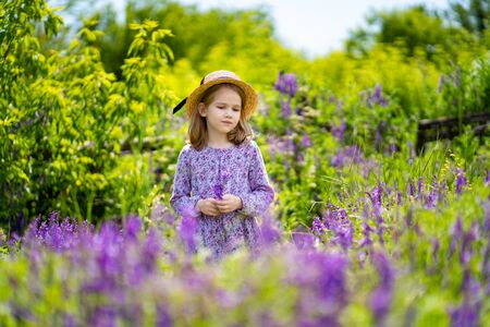 little girl in hat picking a bouquet of purple wildflowers in a meadow. the beauty of nature. walks in outdoor air