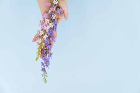 blue, pink and white flowers in hands on blue background. the concept of care of a skin of hands. protection of the environment. natural cosmetics. copy space.