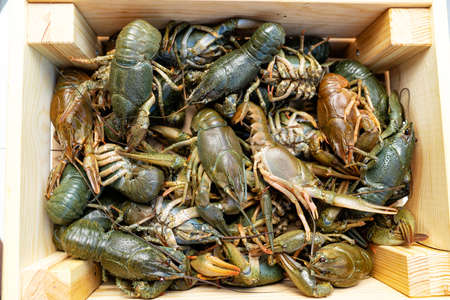 the view from the top. live freshwater lobsters or crayfish in a wooden box.