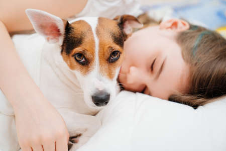 A teenage girl sleeps with her dog in bed. Jack Russell Terrier.