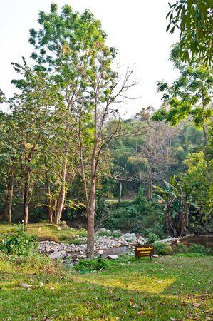 hornbeam: Camping area in wild nature