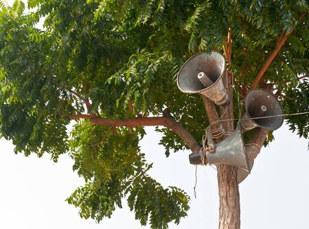 Loudspeaker creative on tree Stock Photo - 13614902