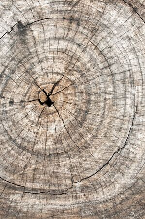 wood log: Grunge of texture wood materials background Stock Photo