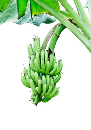 Banana bundle on white isolated