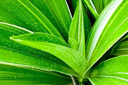 Beautiful of fresh young plant and water drops on leaf