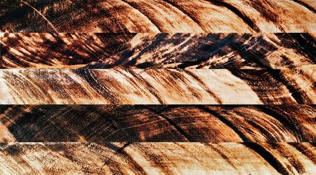 Pattern of burn wood cut background Stock Photo - 17814566
