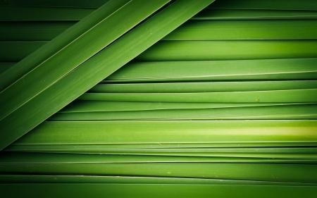 パピルスの抽象的な背景の緑の葉