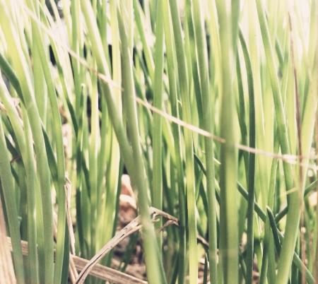 industrieel: Vegetable leaves Stockfoto