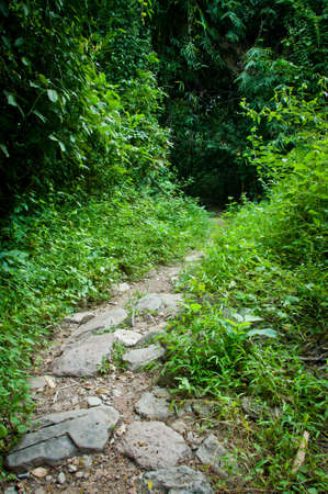 pathway in the green Forest Stock Photo