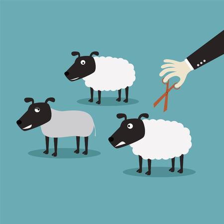 wool sheep: cut of wool sheep