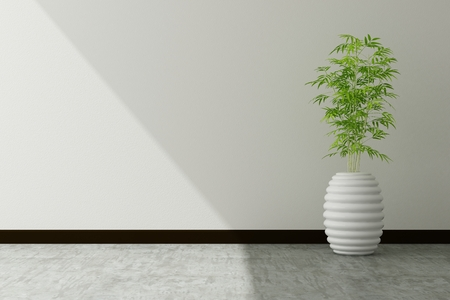 decorative wall: tree pot and white wall interior decorated Stock Photo