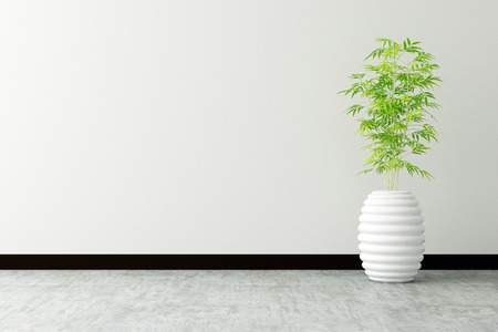 tree pot and white wall interior decorated Stok Fotoğraf