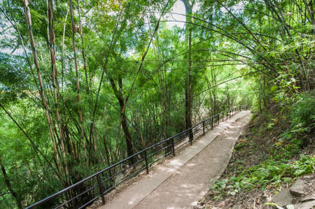 Walk path in forest, travel of Phukradueng, Loei province, Thailand