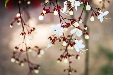 Piękne małe zbliżenie kwiatów Zdjęcie Seryjne