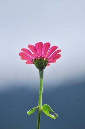flower bloom in the garden photo