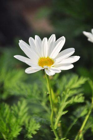 flower in the garden photo