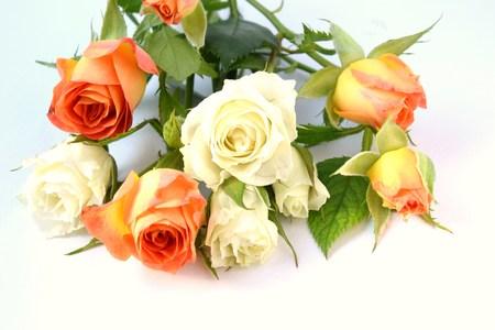 rosas blancas: rosas