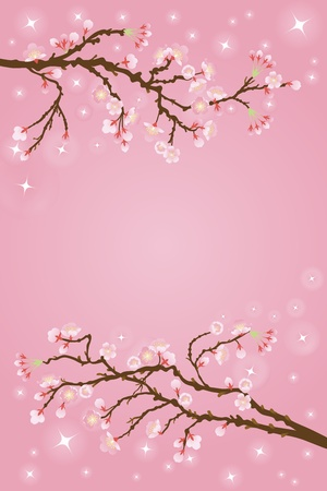 cherry blossoms: cherry blossoms background