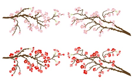 cherry and plum branches Vector
