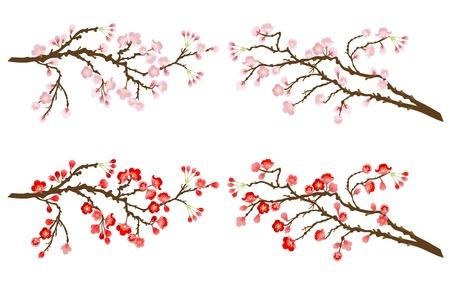 arbol cerezo: ramas de cerezo y ciruelo