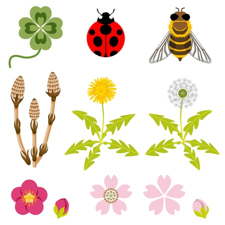 bee on white flower: Spring Icons Illustration