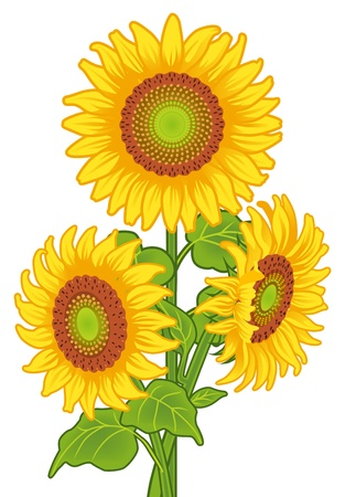 stalk flowers: Sunflowers