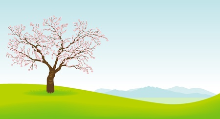 Cherry tree and Spring field Vector