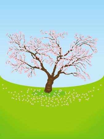 Cherry tree in Grassland Stock Vector - 12184037