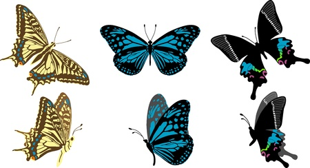 swallowtail: Swallowtail butterfly  Three types Illustration