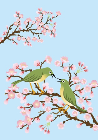 Two bush warbler on cherry blossom branch Stock Vector - 16821788