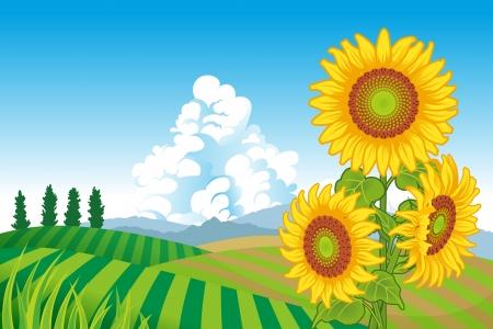 rural scene: Sunflowers in Rural Scene Illustration