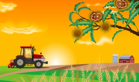 grain fields: Autumn Farm Illustration