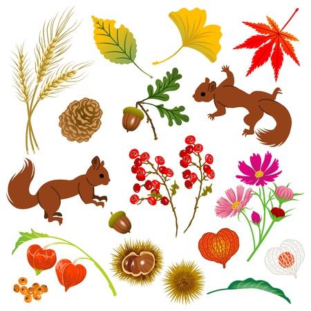 Autumn Material, isoliert Standard-Bild - 21471916